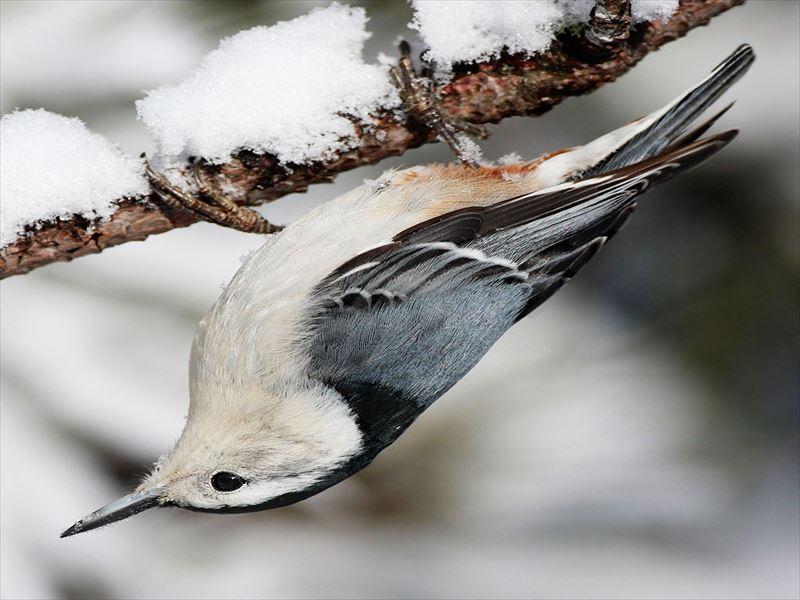 Upsidedownbird